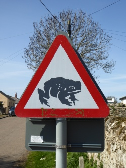 Toads crossing!