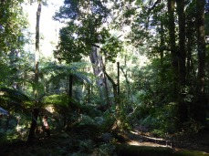 Cathedral of Ferns