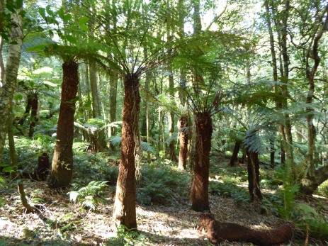 Cathedral of Ferns, Mount Wilson